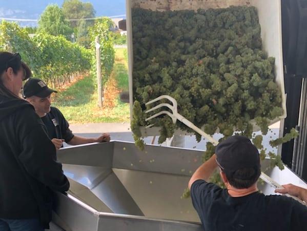 t7 chardonnay harvest aug 30 2018